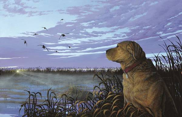 On Watch - Yellow Lab Poster