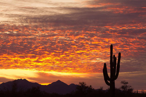 Arizona November Sunrise With Saguaro   Poster