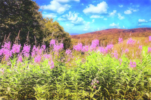 Art Photo Of Vermont Rolling Hills With Pink Flowers In The Foreground Poster