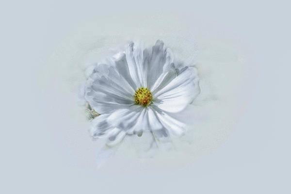 Artistic White #g1 Poster