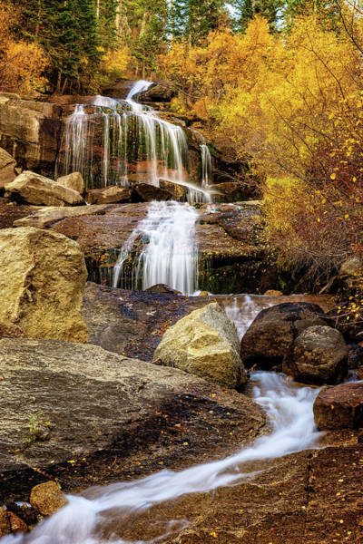 Aspen-lined Waterfalls Poster