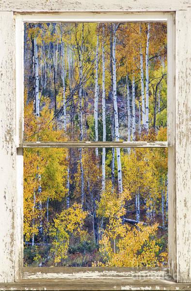 Aspen Tree Magic Cottonwood Pass White Farm House Window Art Poster