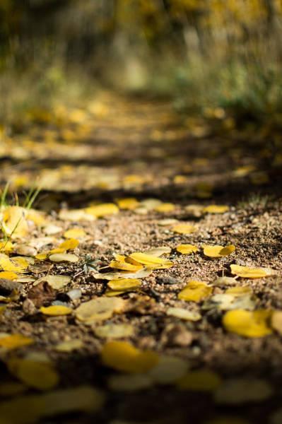 Aspen Leaves On Trail Poster