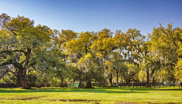 Audubon Park New Orleans Poster