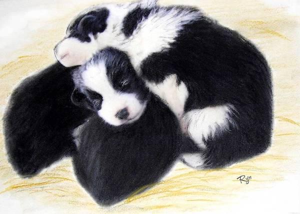 Australian Cattle Dog Puppies Poster