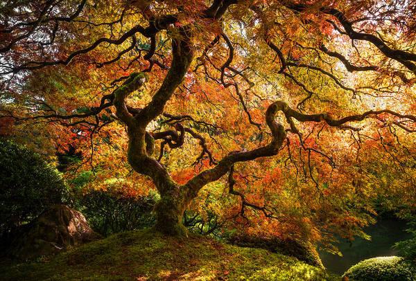 Autumn Arrival Poster
