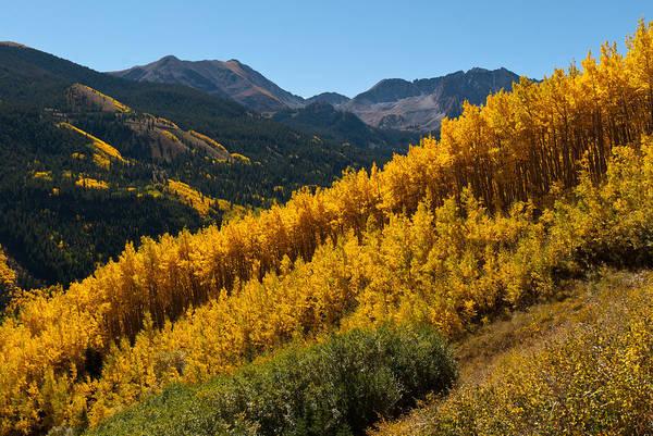 Autumn Aspen Near Castle Creek Poster
