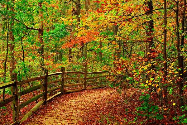 Autumn Bend - Allaire State Park Poster
