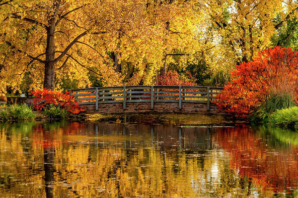 Autumn Color By The Pond Poster