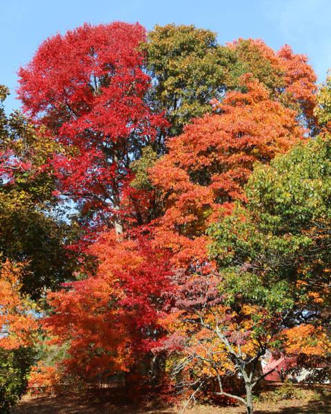 Autumn Color Spray Poster
