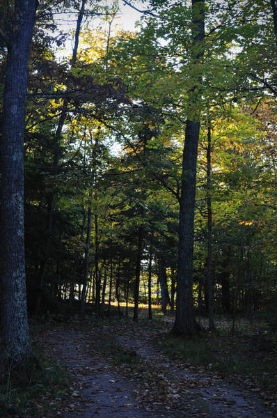 Autumn Glen Poster