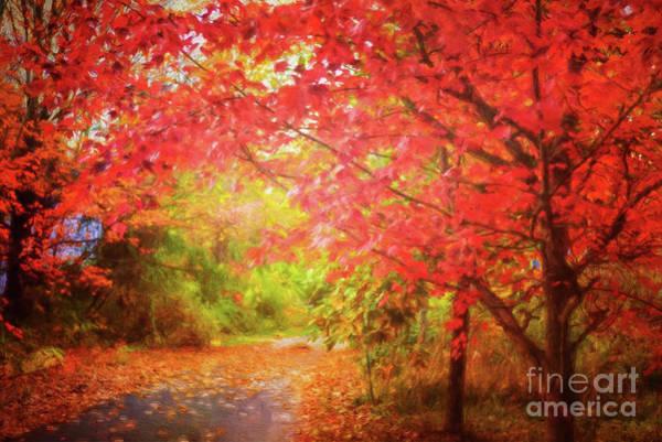 Glorious Foliage On The Rail Trail Poster