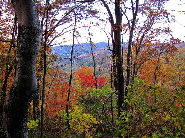 Autumn Leaves On Blue Ridge Parkway Poster