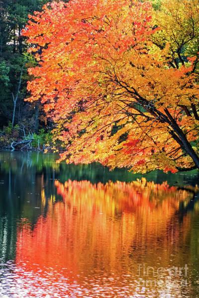 Autumn Magic Poster