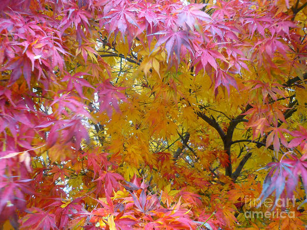 Autumn Pink Poster