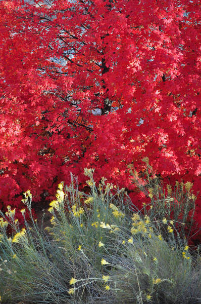 Autumn Splendor In Zion National Park Poster