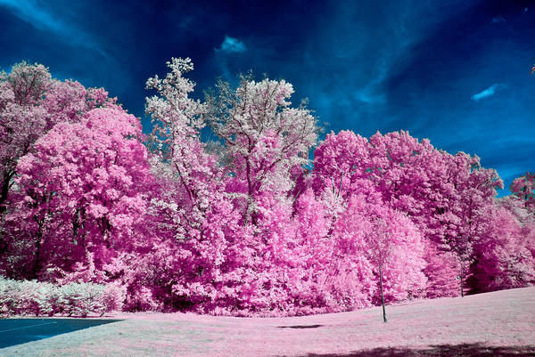 Autumn Trees In Infrared Poster