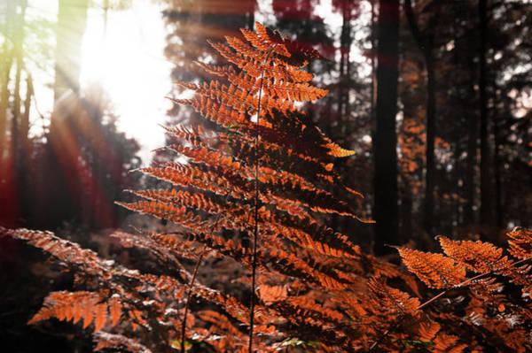 Autumnal Evening Poster