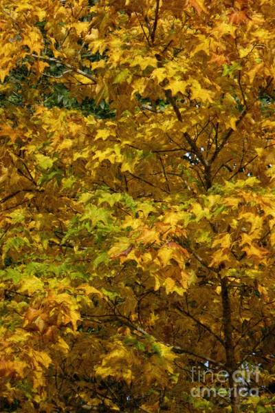 Autumnal Leaves And Trees 2 Poster