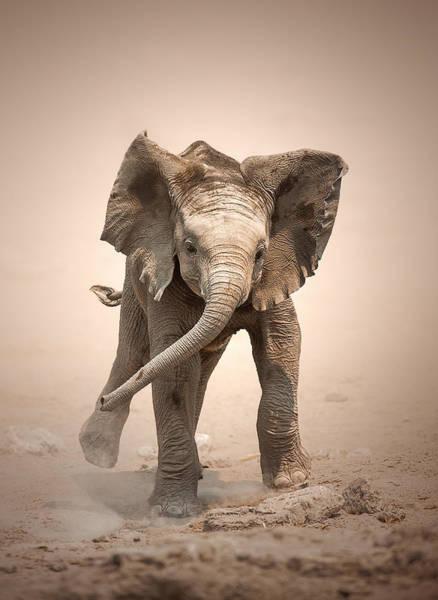 Baby Elephant Mock Charging Poster