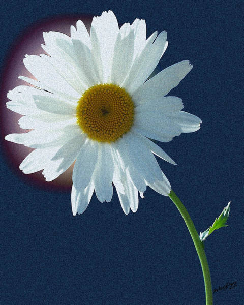 Backlit Daisy Poster