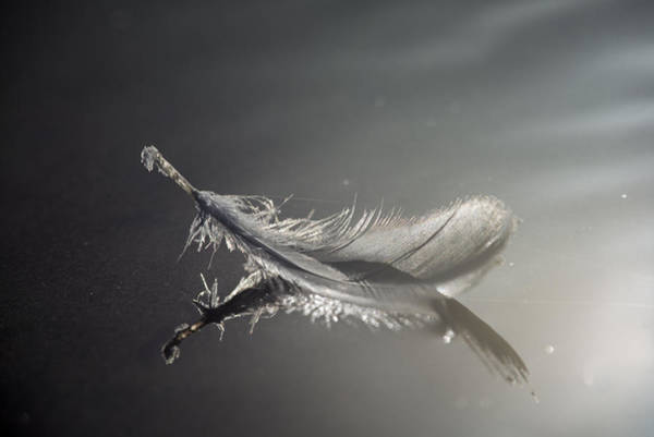 Backlit Feather Poster