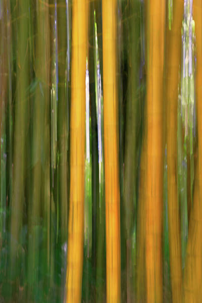 Bamboo Impressions Poster