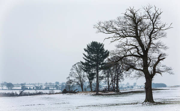 Bare Trees In The Snow Poster