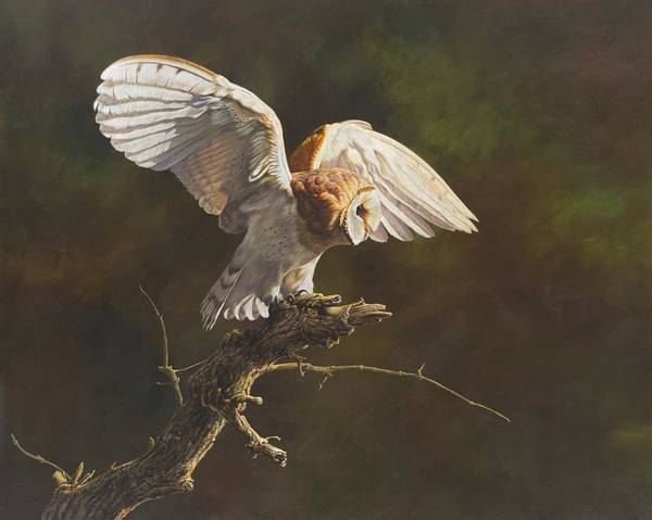 Poster featuring the painting Barn Owl by Alan M Hunt