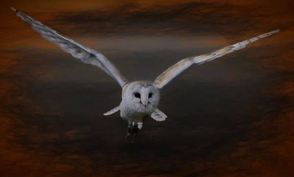 Barn Owl Drama Poster