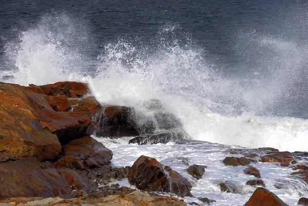 Bass Rocks Poster