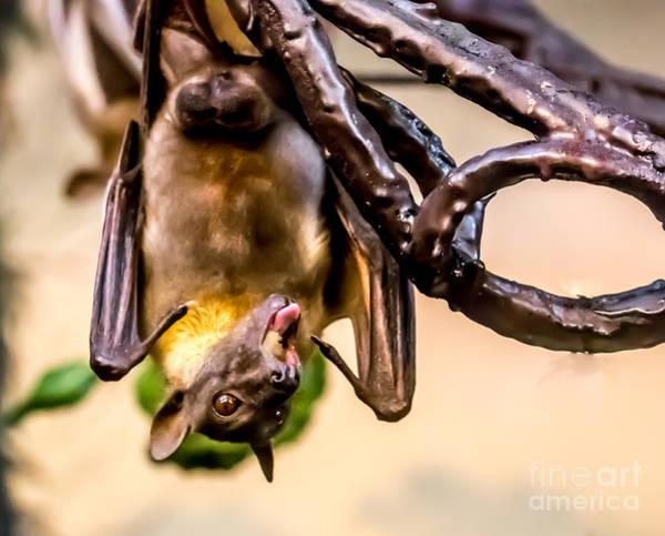 Bat Gobbling Apple Poster