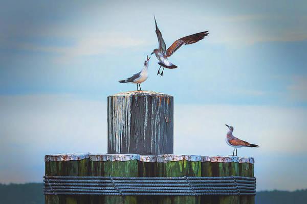 Battle Of The Gulls Poster