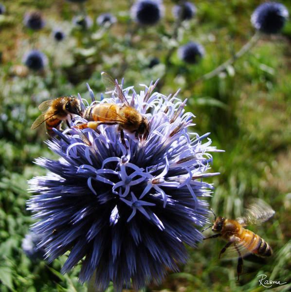 Bee Circles Poster