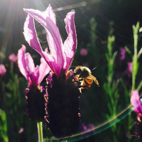 Bee Illuminated Poster