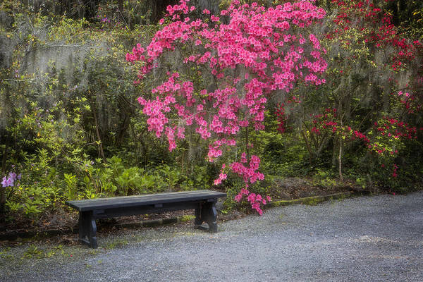 Bench In Azalea Garden Poster