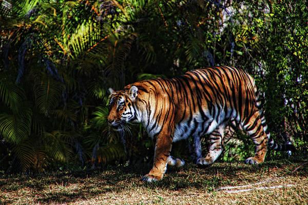 Bengal Tiger - Rdw001072 Poster