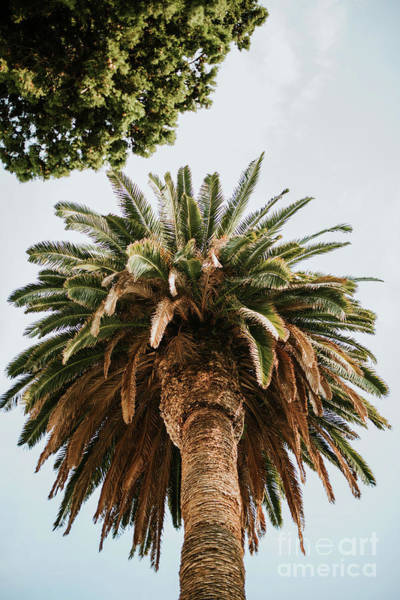 Big Palm Tree Poster