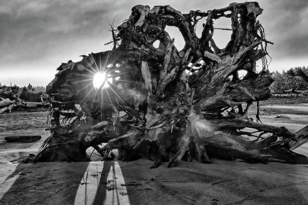 Big Tree On The Beach At Sunrise In Monochrome Poster