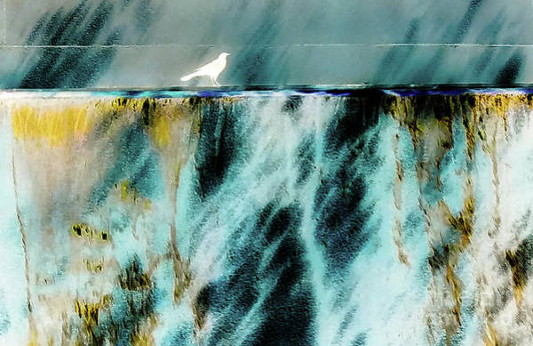 Bird At The Abstract Fountain Poster