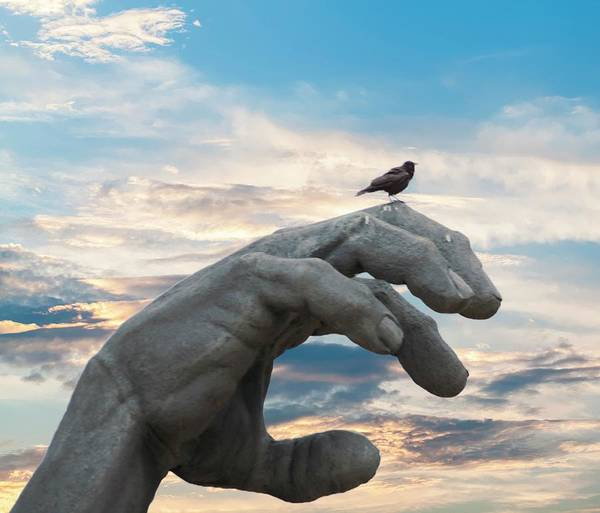 Bird On Hand Poster