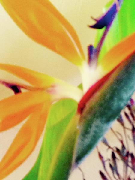 Birds Bromeliads Halyconia 2 Poster