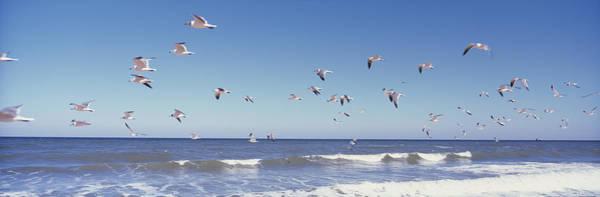 Birds Flying Over The Sea, Flagler Poster