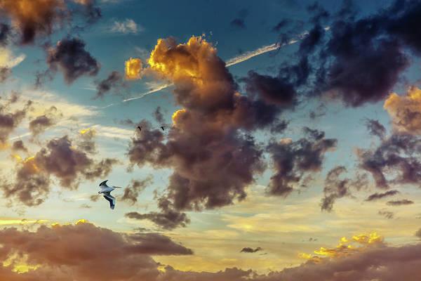 Birds In Flight At Sunset Poster