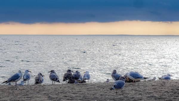 Birds On A Beach Poster