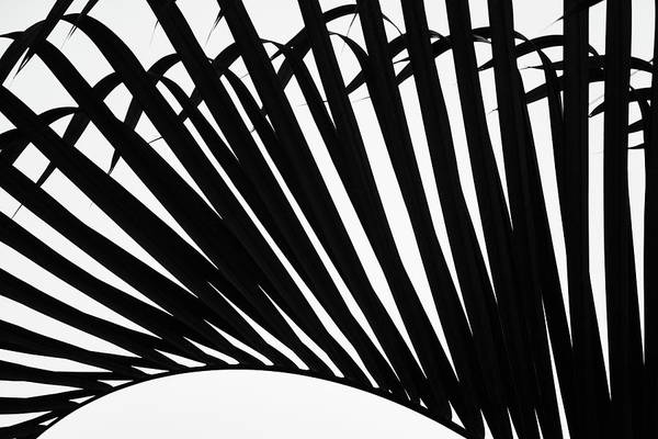 Black And White Palm Branch Poster