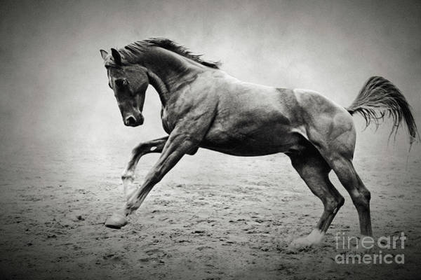 Black Horse In Dust Poster