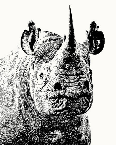 Black Rhino Portrait Poster