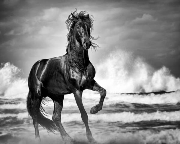 Poster featuring the photograph Black Stallion In Waves by Gigi Ebert