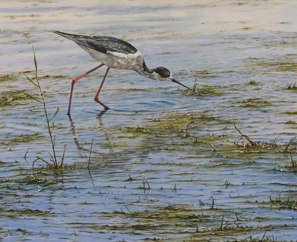 Poster featuring the painting Black Winged Stilt by Alan M Hunt